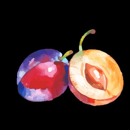 Steinfrucht