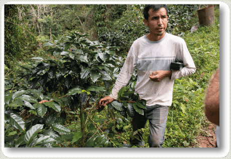 Kaffeeplantage in Peru